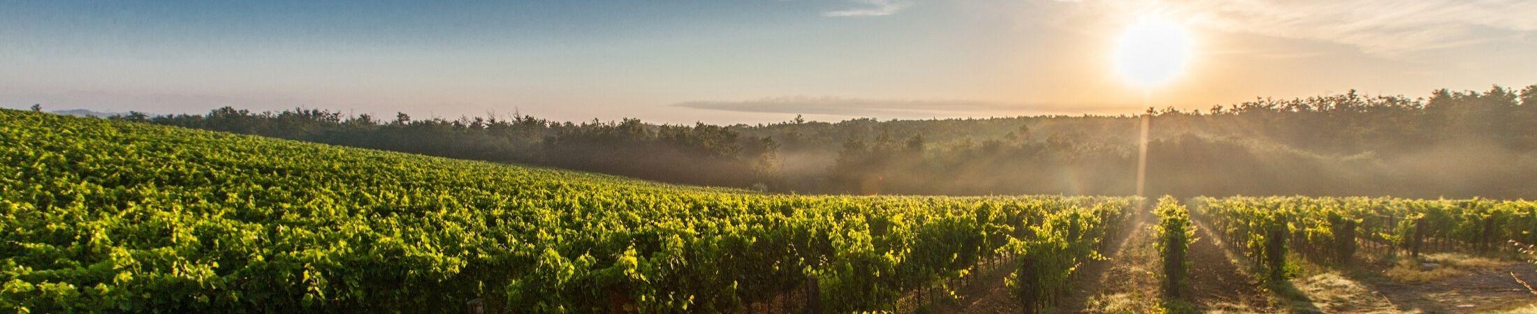 Site En Ligne Dédié Au Meilleur Vin De France Château De Lugagnac